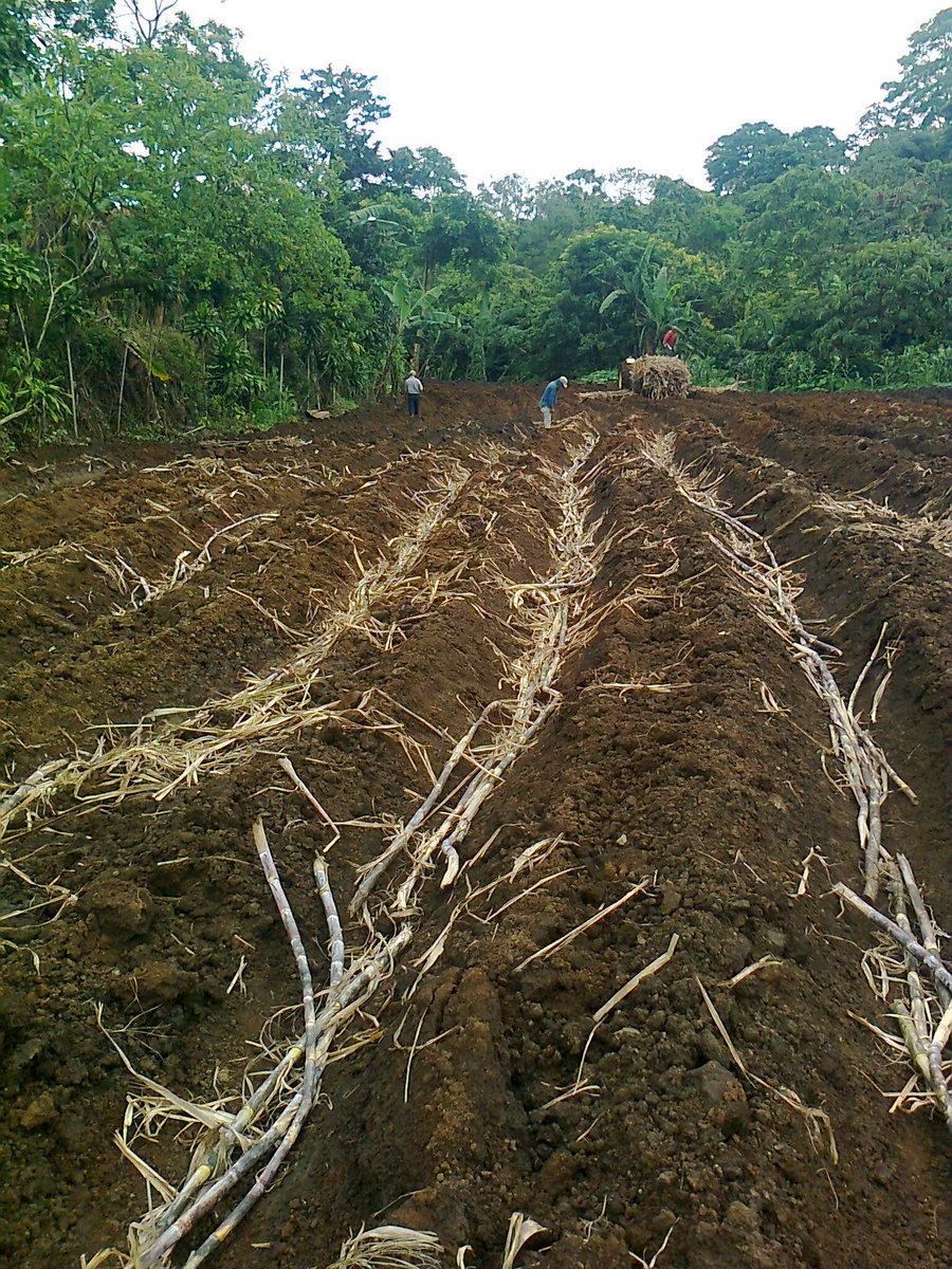 Preparación de terrenos